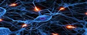 synapse1